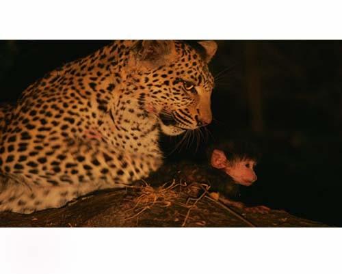 Leoparın İntikamı 10
