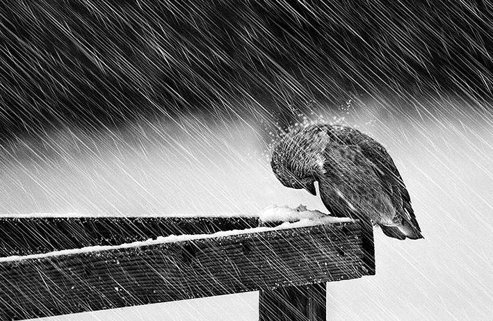 Kış ve Hayvanlar 11