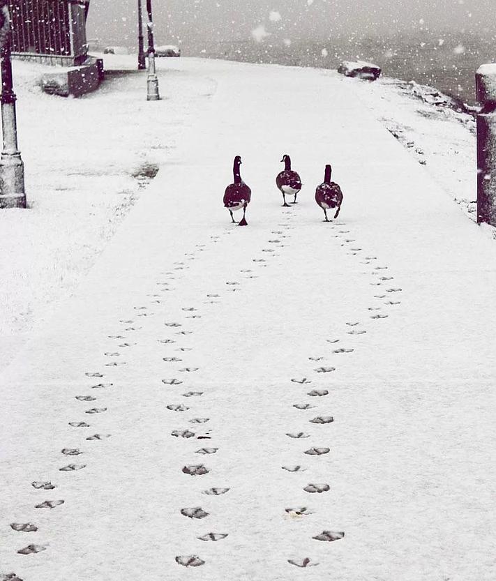 Kış ve Hayvanlar 12