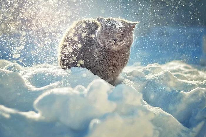 Kış ve Hayvanlar 15