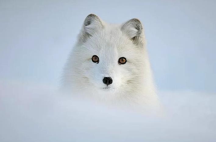 Kış ve Hayvanlar 18