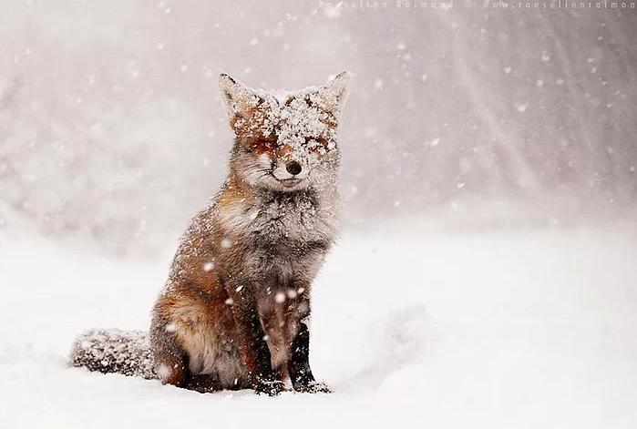Kış ve Hayvanlar 6