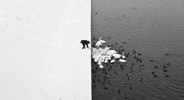 Kış ve Hayvanlar 8