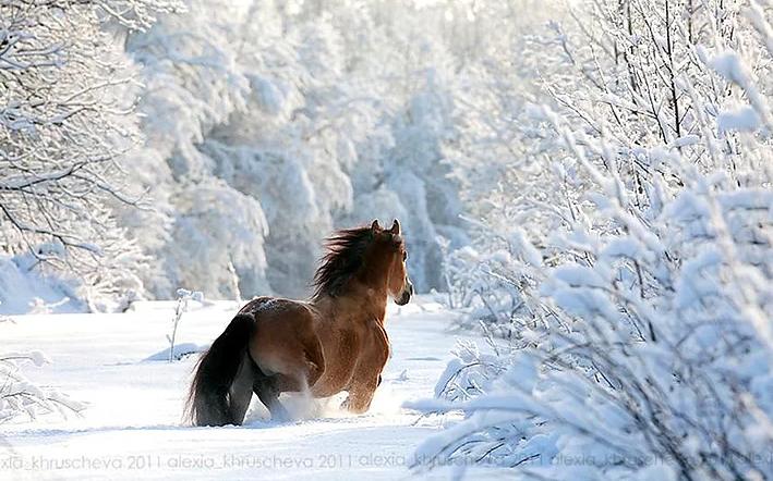 Kış ve Hayvanlar 9