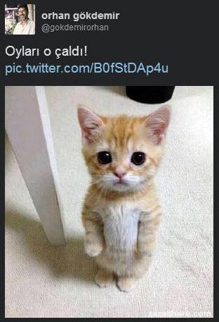 Sosyal medyada 'kedidir kedi' sarsıntısı 10