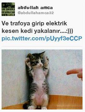 Sosyal medyada 'kedidir kedi' sarsıntısı 12