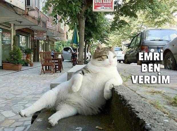 Sosyal medyada 'kedidir kedi' sarsıntısı 5