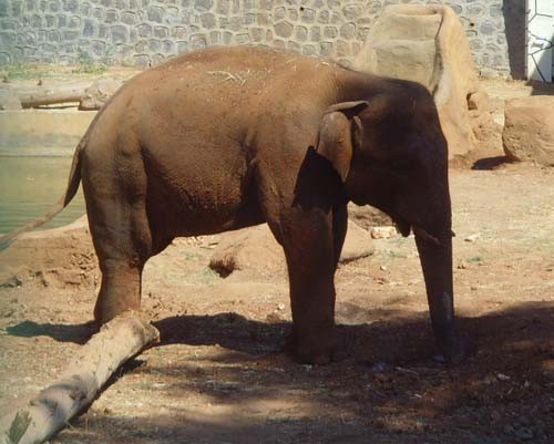 Gaziantep Hayvanat Bahçesi 1