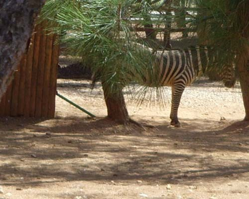 Gaziantep Hayvanat Bahçesi 10