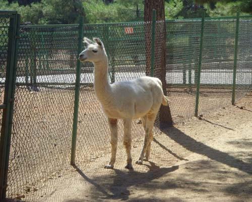Gaziantep Hayvanat Bahçesi 11