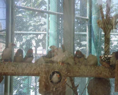 Gaziantep Hayvanat Bahçesi 14