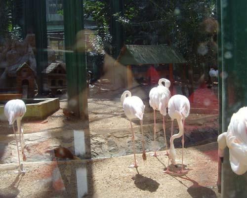 Gaziantep Hayvanat Bahçesi 15