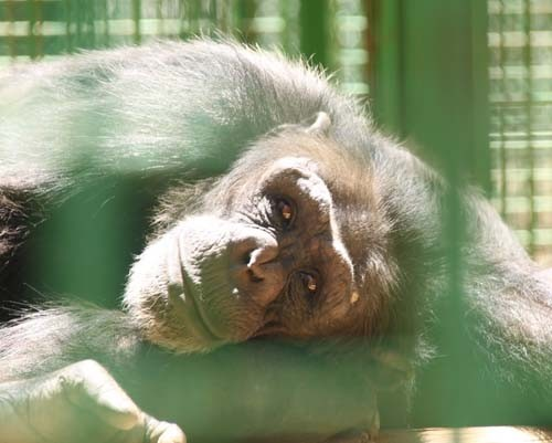 Gaziantep Hayvanat Bahçesi 18