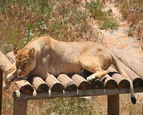 Gaziantep Hayvanat Bahçesi 19