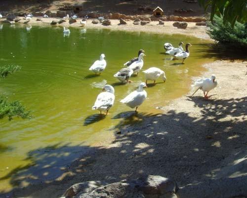 Gaziantep Hayvanat Bahçesi 7