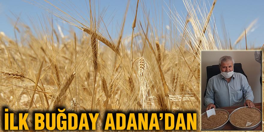 İlk buğday Adana'dan