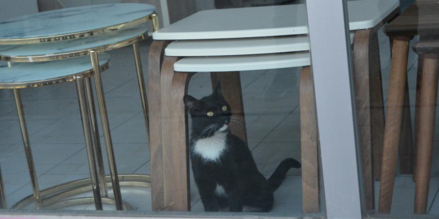 Mağazada mahsur kalan kedi kurtarıldı