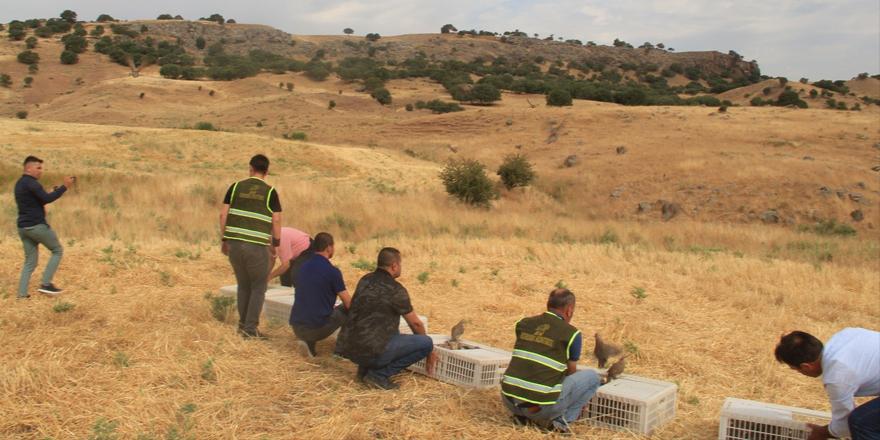 Şırnak'ta 750 kınalı keklik doğaya bırakıldı