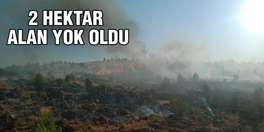 2 hektarlık alan zarar gördü