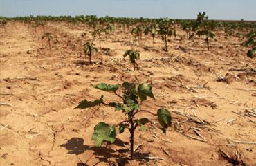 Bursada kuraklık acil eylem planı hazır