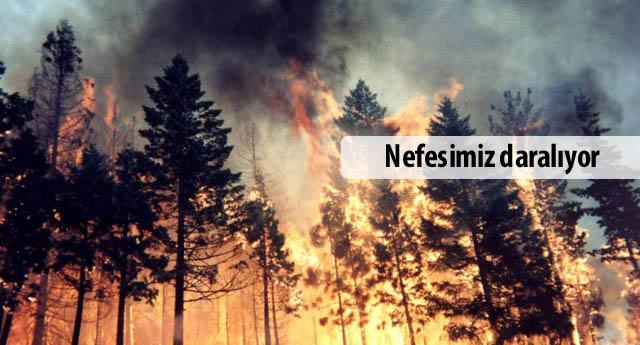 Ormanları ihmal yakıyor