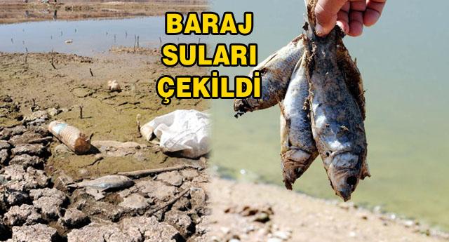 BALIK ÖLÜMLERİ BAŞLADI