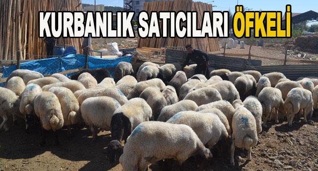 Suriye koyunlarına tepki