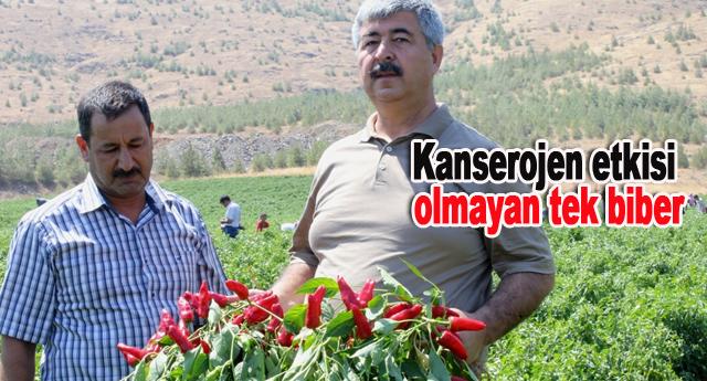 Eski Tarım Müdürü Ibrahim Yılmaz'ın eseri
