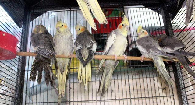 Papağanın fiyatı dudak uçuklattı
