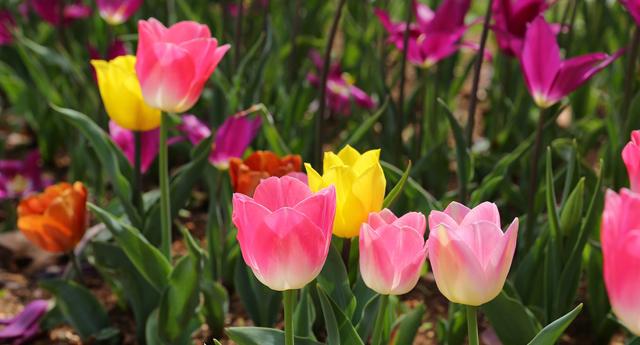 Bahar yüzünü gösterdi