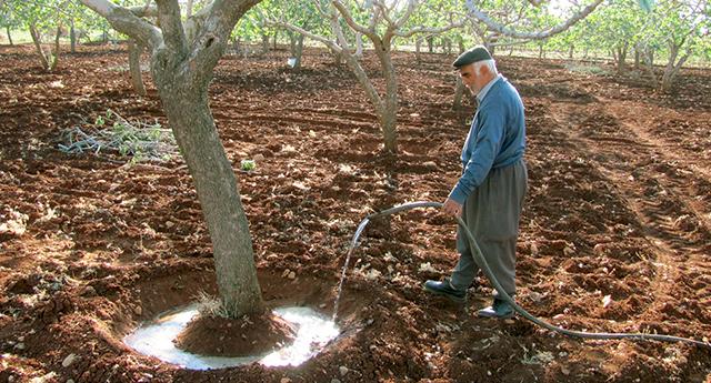 Kuraklık, fıstık üreticilerini harekete geçirdi