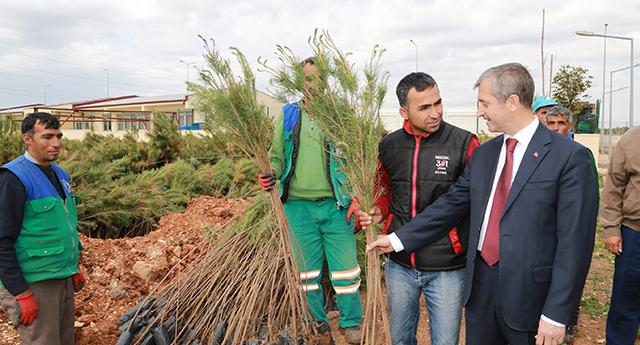 Şahinbey Gaziantep'i yeşillendiriyor