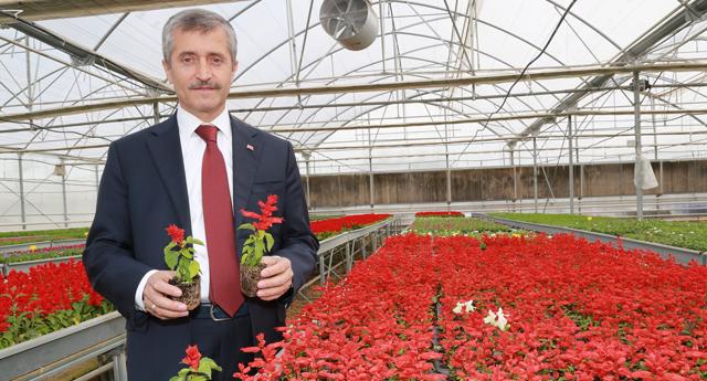 Belediye çiçek üretiyor