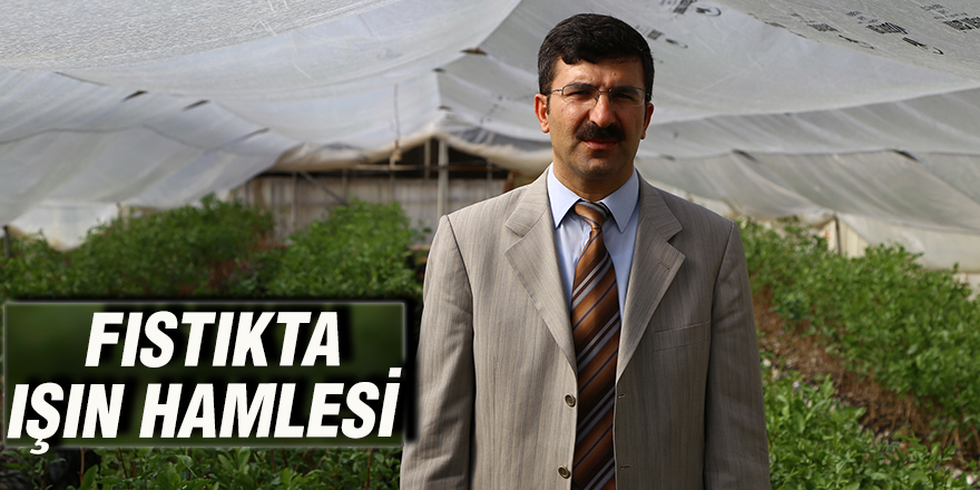 FISTIKTA IŞIN HAMLESİ