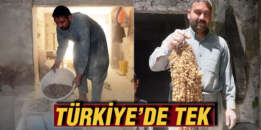 TÜRKİYE'DE TEK