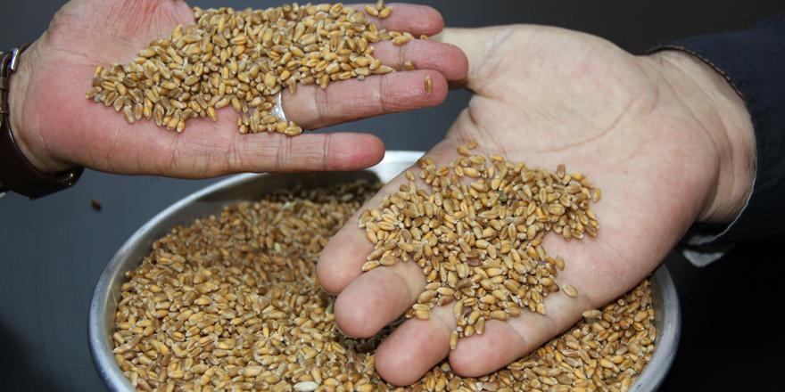 İlk buğday 1 TL'den işlem  gördü