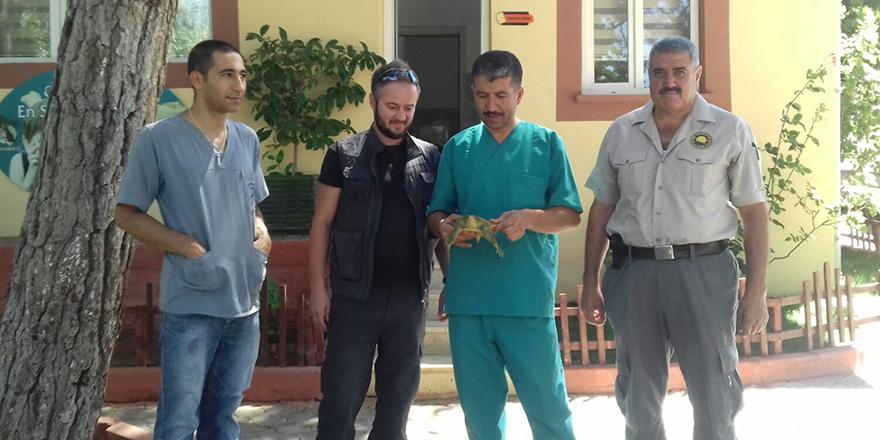 Yaralı kaplumbağaları tedavi ettiler