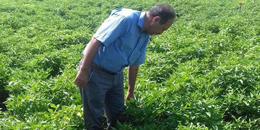 Çiftçi umutlu