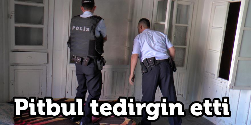 Polis baskınında pitbul tedirginliği