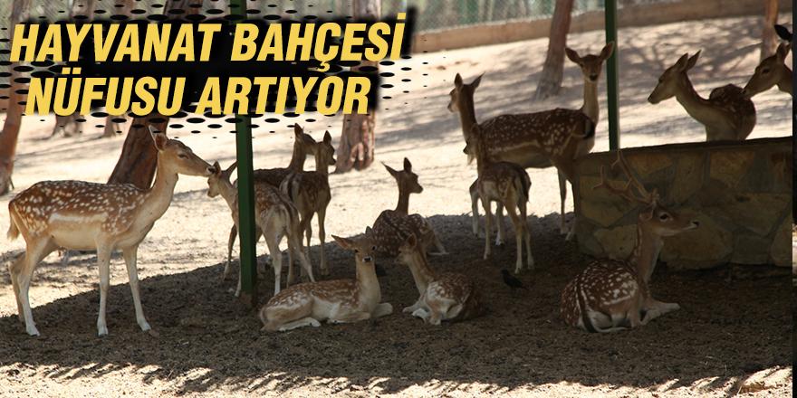 Hayvanat bahçesi nüfusu artıyor