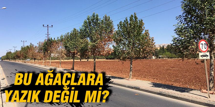 Bu ağaçlara yazık değil mi?