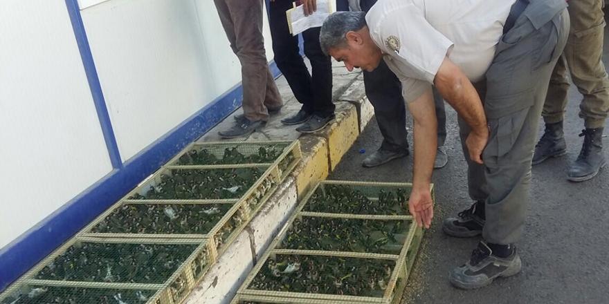 Gaziantep'te kuş kaçakçısına suçüstü