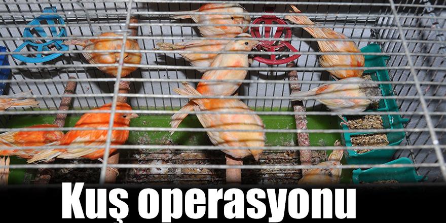 Kuş operasyonu