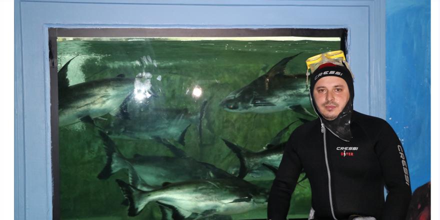 Köpek balıkları ve piranaları elleriyle besliyor