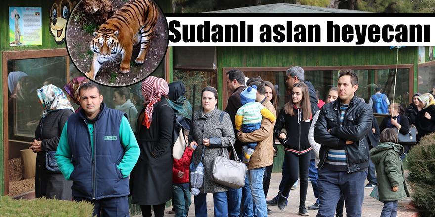 Sudanlı aslan heyecanı