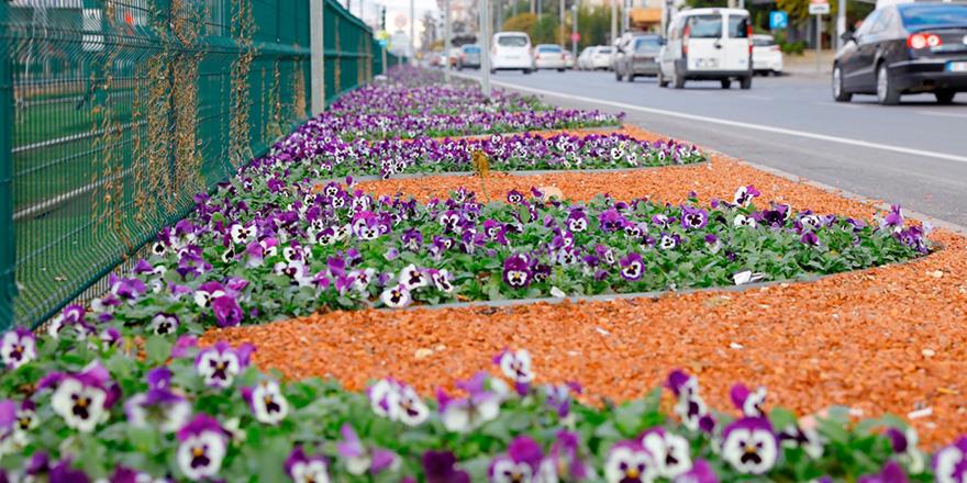 Belediyeden çiçek atağı
