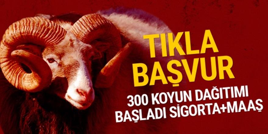 300 koyun alma başvuru sayfası TİGEM kayıtlar başladı