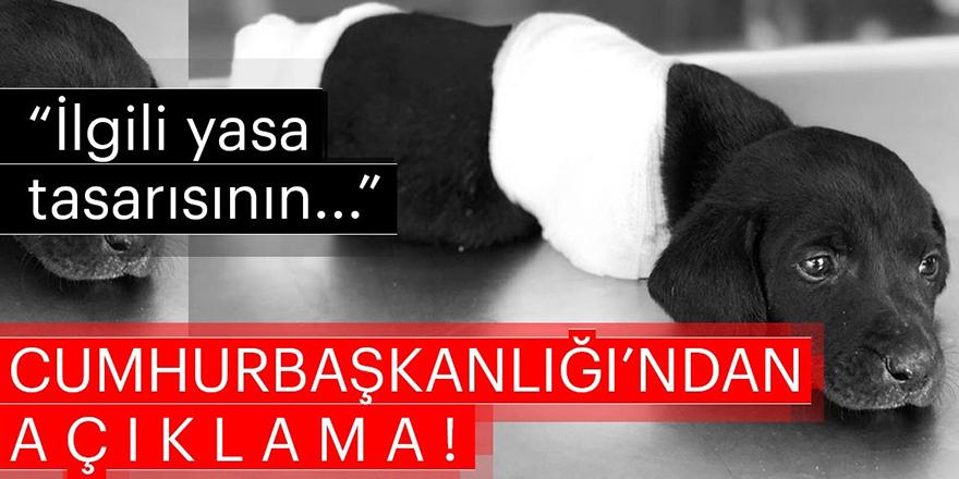 Cumhurbaşkanlığı'ndan bacakları kesilerek öldürülen köpeğe ilişkin flaş açıklama!