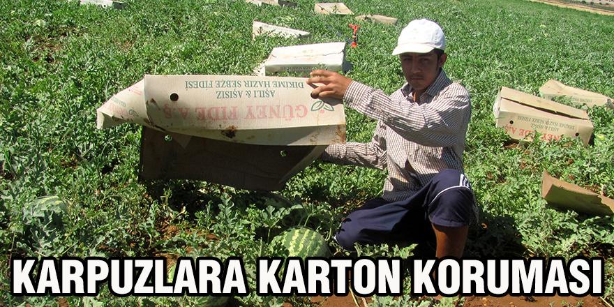 Karpuzlara karton koruması