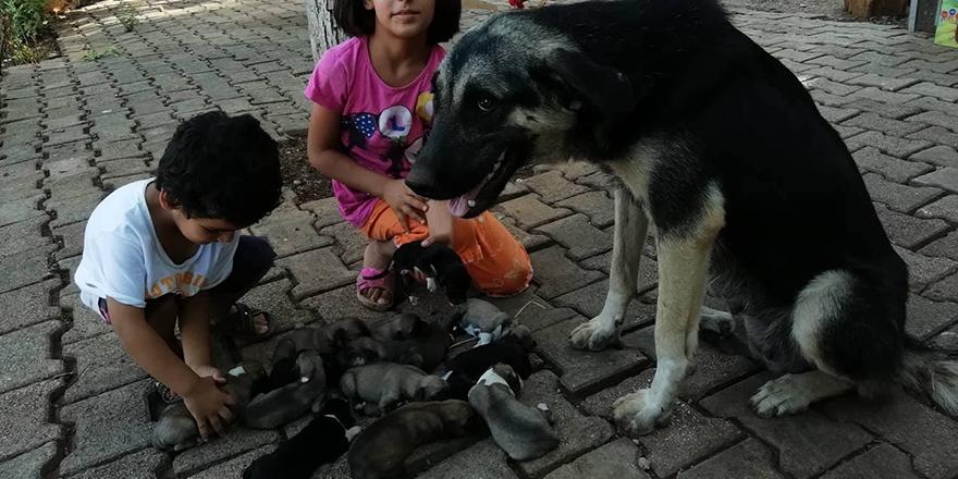 Karakız 13 yavru doğurdu